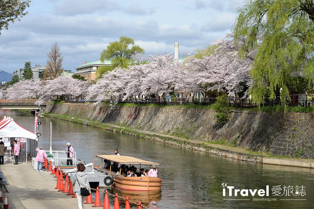 京都赏樱景点 冈崎疏水道 (3)