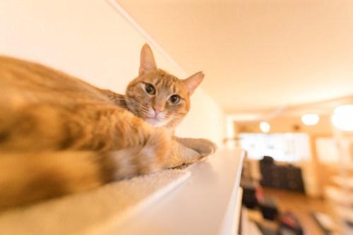 アトリエイエネコ Cat Photographer 40261573444_863232a7d7 1日1猫!保護猫カフェみーちゃ・みーちょ その1 未分類  里親様募集中 猫写真 猫 子猫 大阪 初心者 写真 保護猫カフェ 保護猫 カメラ みーちゃ・みーちょ Kitten Cute cat