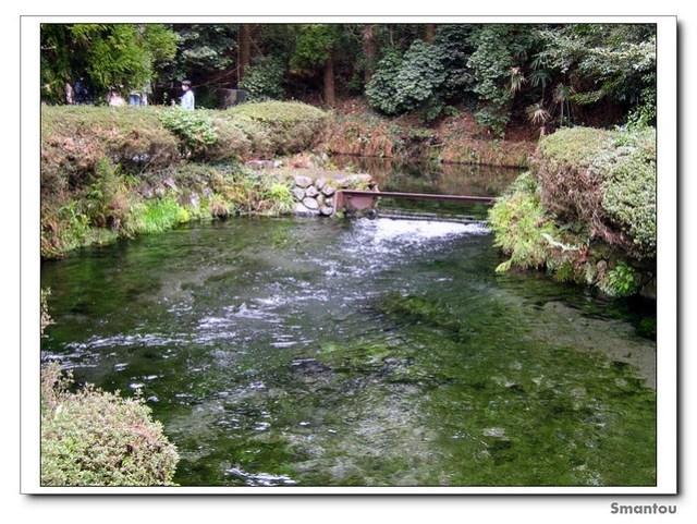 熊本-白川水源 Shirakawa River Source