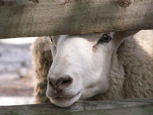 I See Ewe!