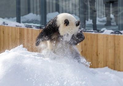Ähtäri Zoo, Finland