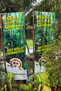 Flight of the Gibbon
