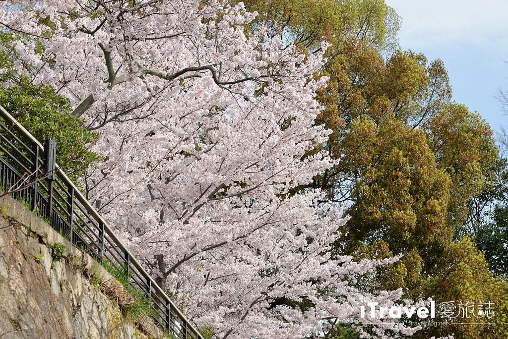 京都賞櫻景點 岡崎疏水道 (10)