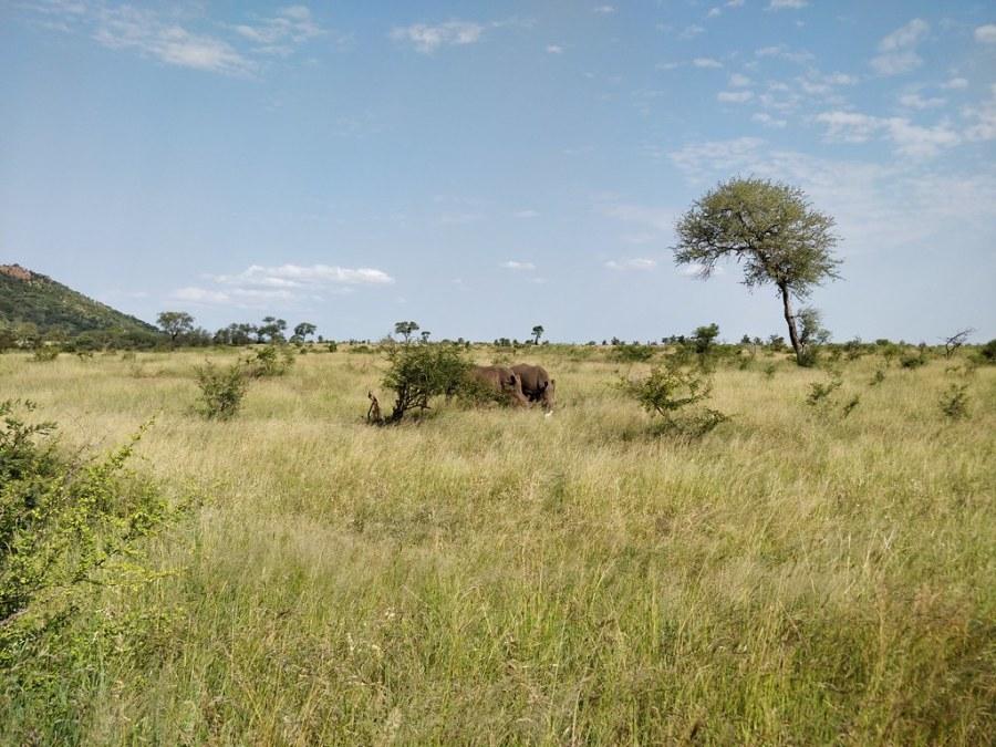 Kruger National Park South Africa Travel Blog Rhinoceros