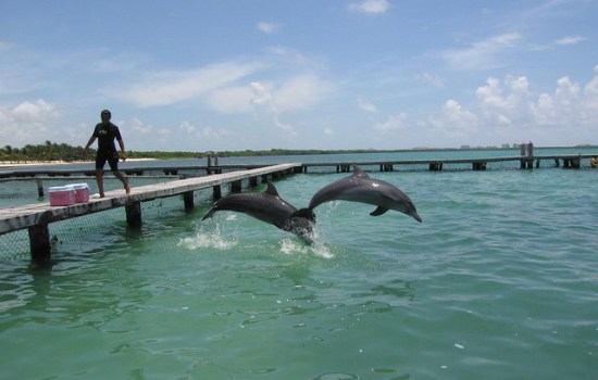 cancun dolphins