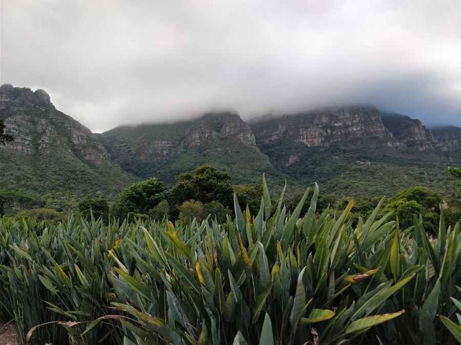 Cape Town South Africa Travel Blog Kirstenbosch Garden