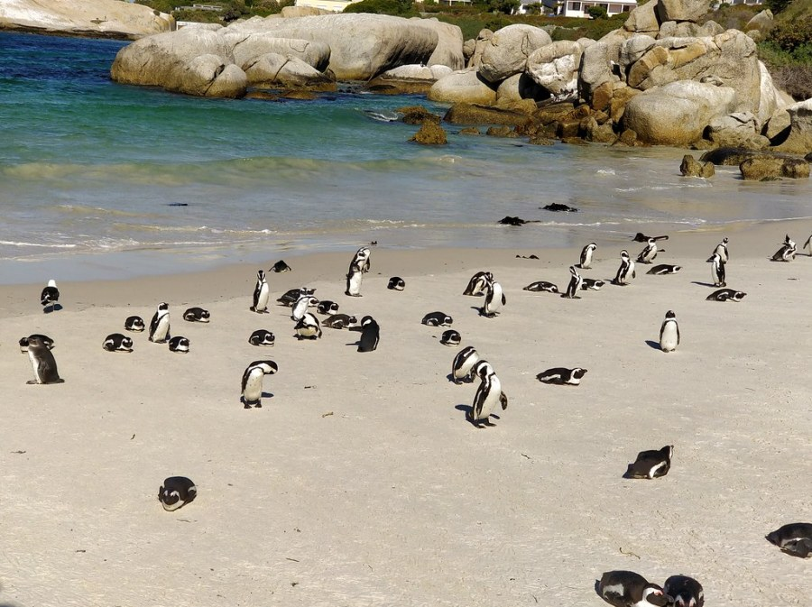 Cape Town South Africa Travel Blog Penguin Island