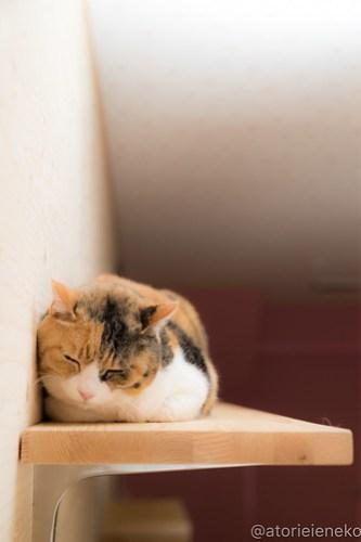 アトリエイエネコ Cat Photographer 41146371191_a5207d9e8f 1日1猫!ニャンとぴあ 里親様募集中のリィちゃん♪ 1日1猫!  里親様募集中 猫写真 猫カフェ 猫 子猫 大阪 写真 保護猫カフェ 保護猫 ミケ ニャンとぴあ スマホ カメラ おおさかねこ倶楽部 Kitten Cute cat