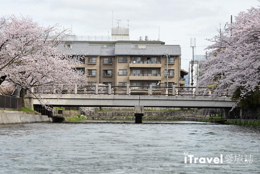 京都赏樱景点 冈崎疏水道 (25)