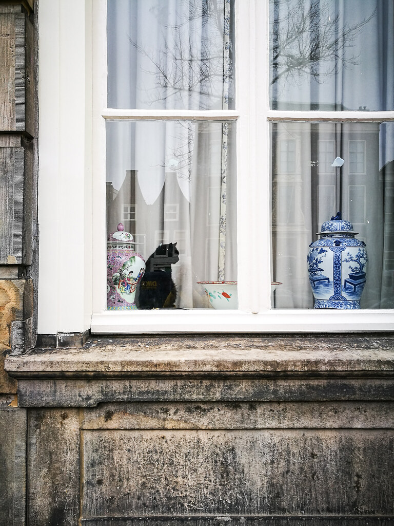window cat in leiden