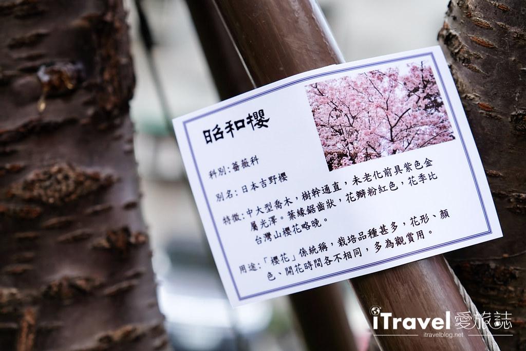 土城赏樱景点 希望之河左岸樱花 (19)