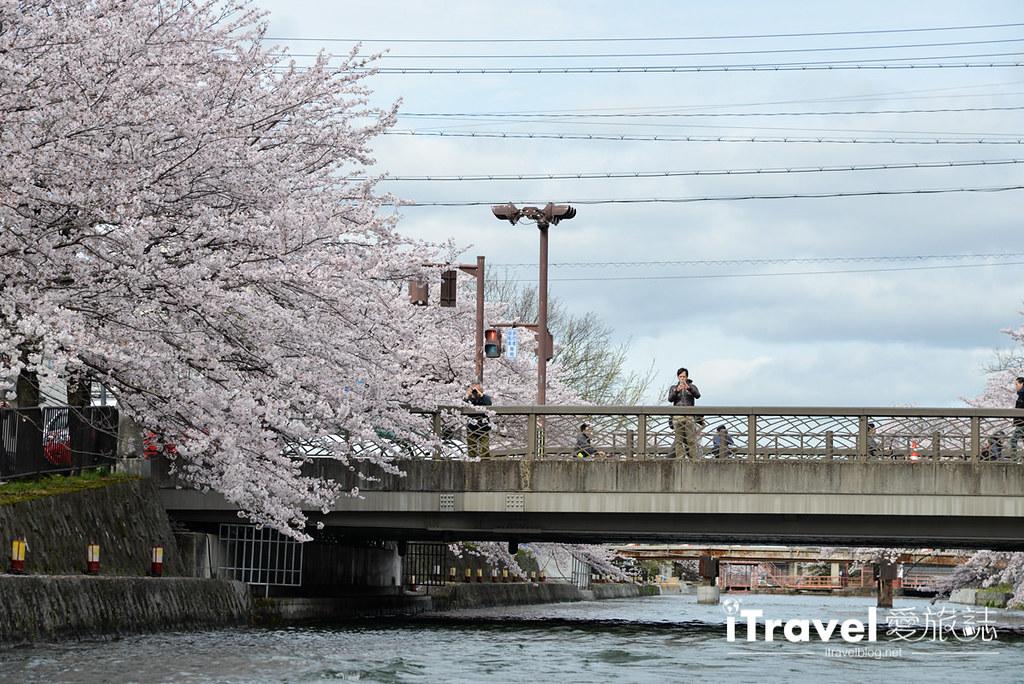 京都赏樱景点 冈崎疏水道 (22)