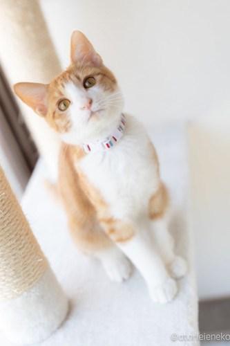 アトリエイエネコ Cat Photographer 40230589980_7fe3c5a94a 保護猫カフェ 森のねこ舎 (や)のブログ