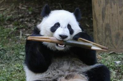 Xi Lun