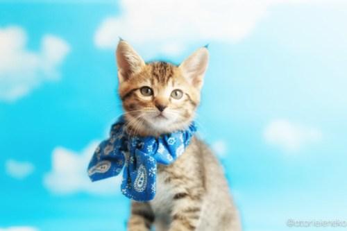 アトリエイエネコ Cat Photographer 41824872812_e619459a4d 1日1猫!ニャンとぴあキャッツ 里親様募集中のサンマくん♪ 1日1猫!  里親様募集中 猫写真 猫カフェ 猫 子猫 大阪 初心者 写真 保護猫カフェ 保護猫 ニャンとぴあ スマホ キジ猫 カメラ おおさかねこ倶楽部 Kitten Cute cat