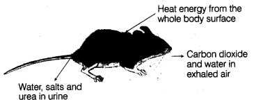 ncert-solutions-class-10th-science-chapter-15-environment-13