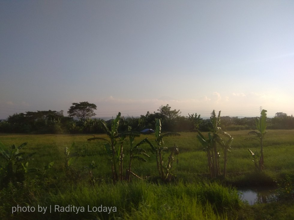 02 TRIP REPORT KERETA API JAYABAYA 2 (CIREBON TEGAL) - HAMPARAN SAWAH 2