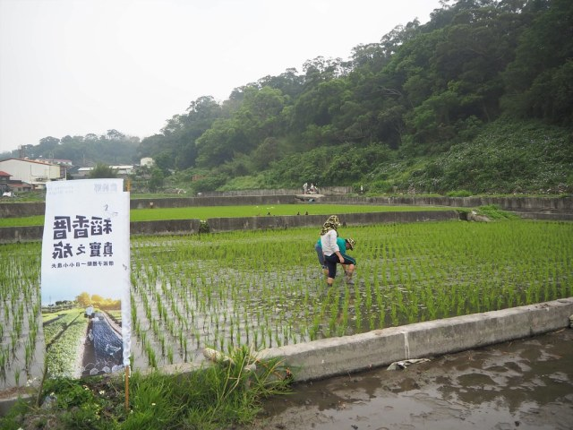 農純鄉 (3)