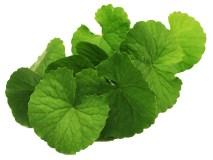 Obat Herbal Vertigo Di Apotik