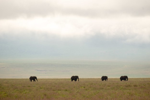 Elephants on the crater plains