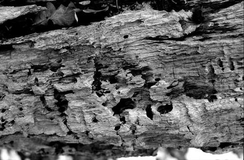 Image: Rotten Wood
