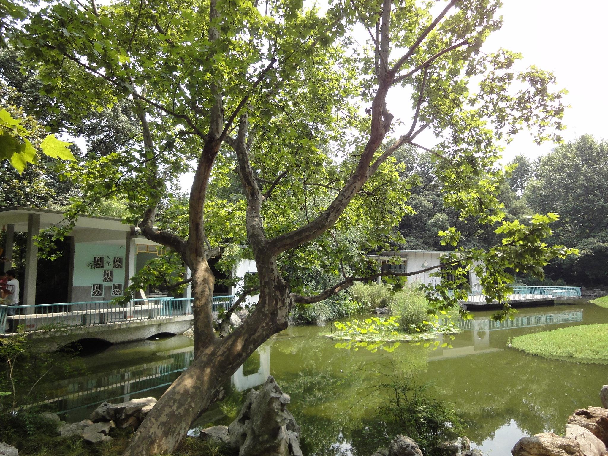 Parcs et Jardins  Shanghai  ChinePassion  Dcouvrir la Chine