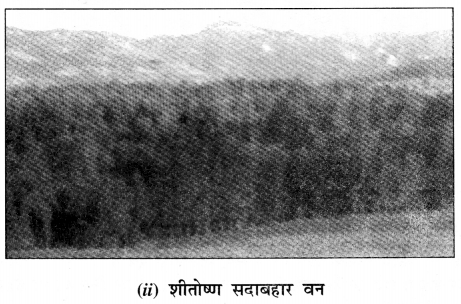 NCERT Solutions for Class 7 Social Science Geography Chapter 6 (Hindi Medium) 4