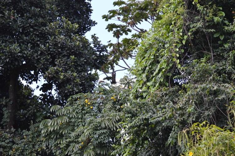 Jardim Botânico do Recife