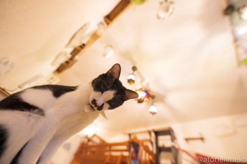 アトリエイエネコ Cat Photographer 43855058491_32cf5c0c5e 1日1猫!保護猫カフェウリエルへ行ってきた(2/2)♪ 1日1猫!  里親様募集中 猫写真 猫カフェ 猫 子猫 大阪 初心者 写真 保護猫カフェウリエル 保護猫カフェ 保護猫 中崎町 スマホ カメラ ウリエル Kitten Cute cat