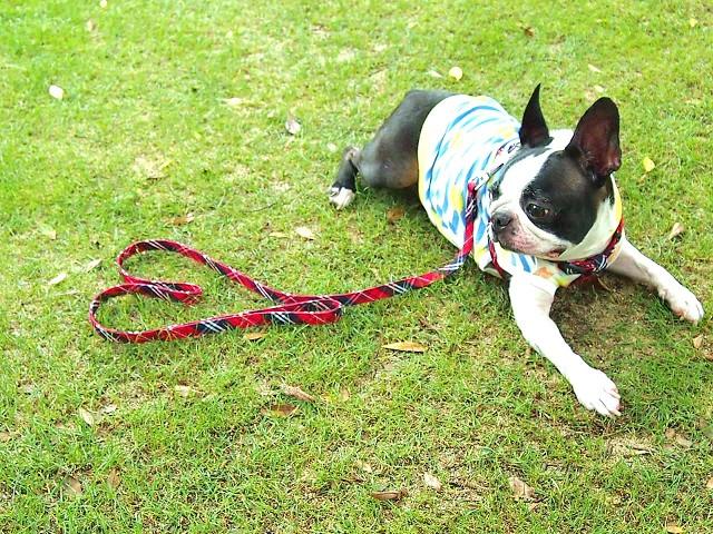 地震対策としてリードの予備を準備している犬