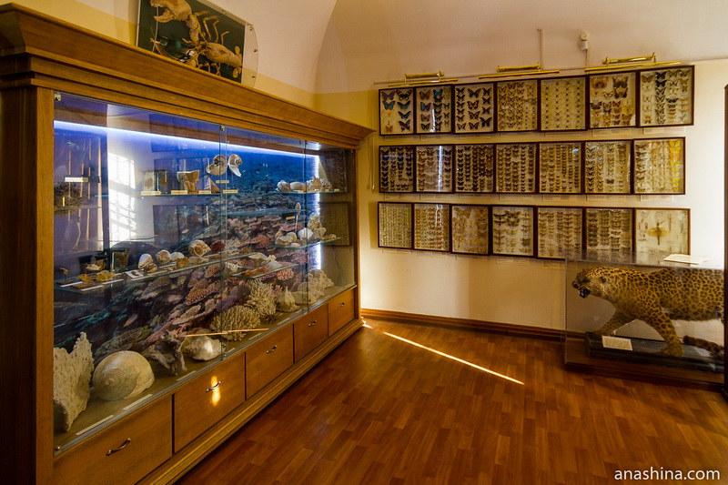Естественнонаучная экспозиция, Калужский краеведческий музей