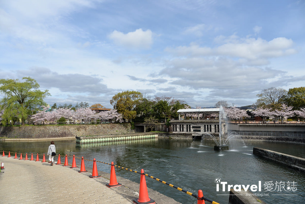 京都賞櫻景點 岡崎疏水道 (2)