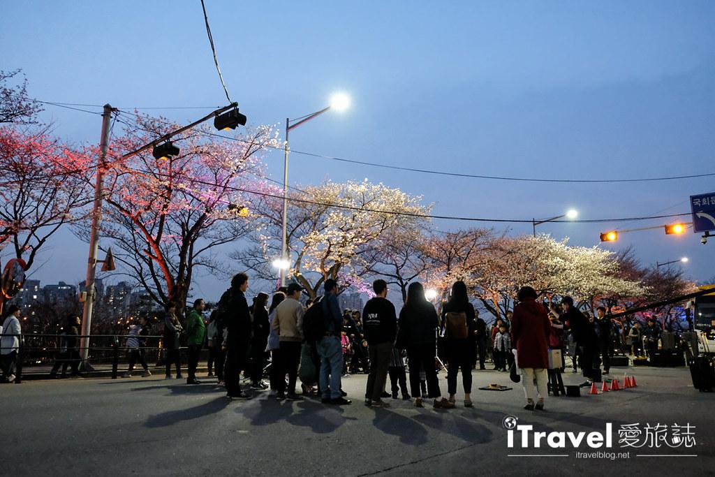 首爾賞櫻景點 汝矣島 (28)