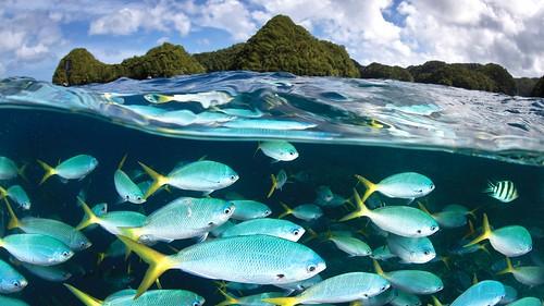 palau-diving-center-1920x1080-5k-4k-wallpaper-malakal-island-diving-5085