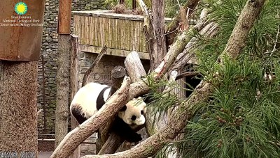 Bei climbing in mama's trees  ./ed724.png