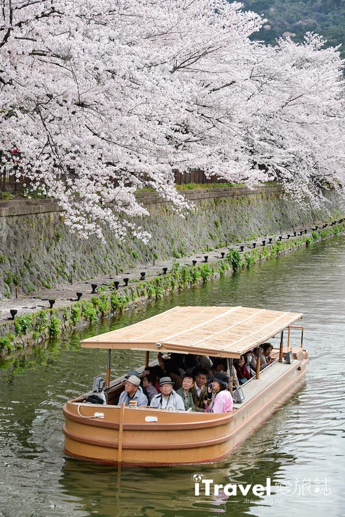 《京都賞櫻景點》岡崎十石舟:2018春季限定的櫻迴廊疏水遊