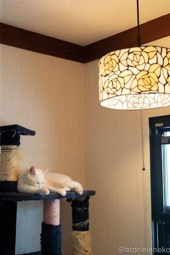 アトリエイエネコ Cat Photographer 27742418458_008e79662a 1日1猫!小さな猫カフェ「ペルちゃん」に行ってきた その2♪ 1日1猫!  里親様募集中 猫写真 猫 子猫 大阪 写真 保護猫カフェ 保護猫 カメラ Kitten Cute cat