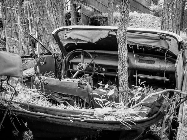 Impala convertible - and tree