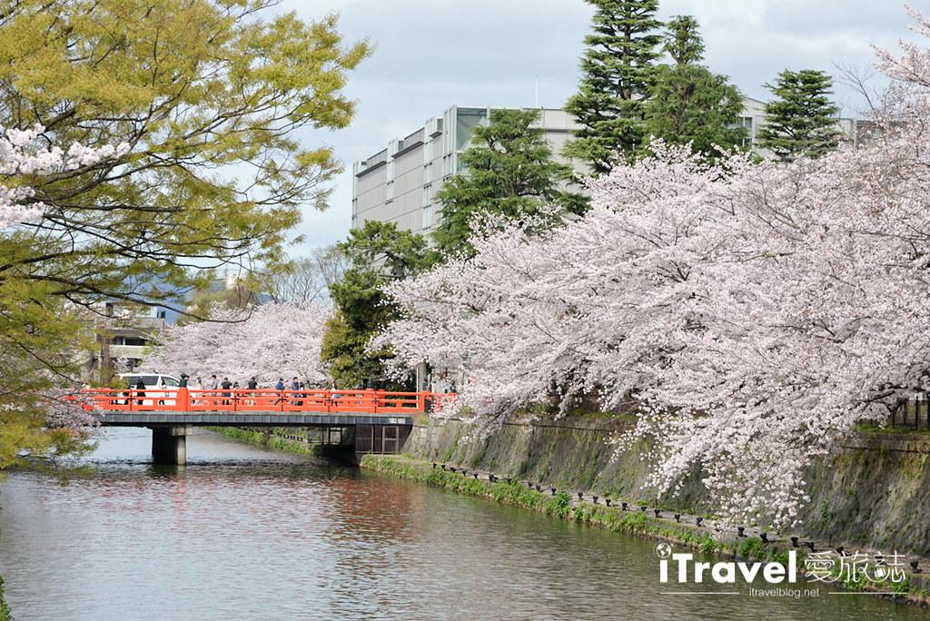 京都赏樱景点 冈崎疏水道 (29)