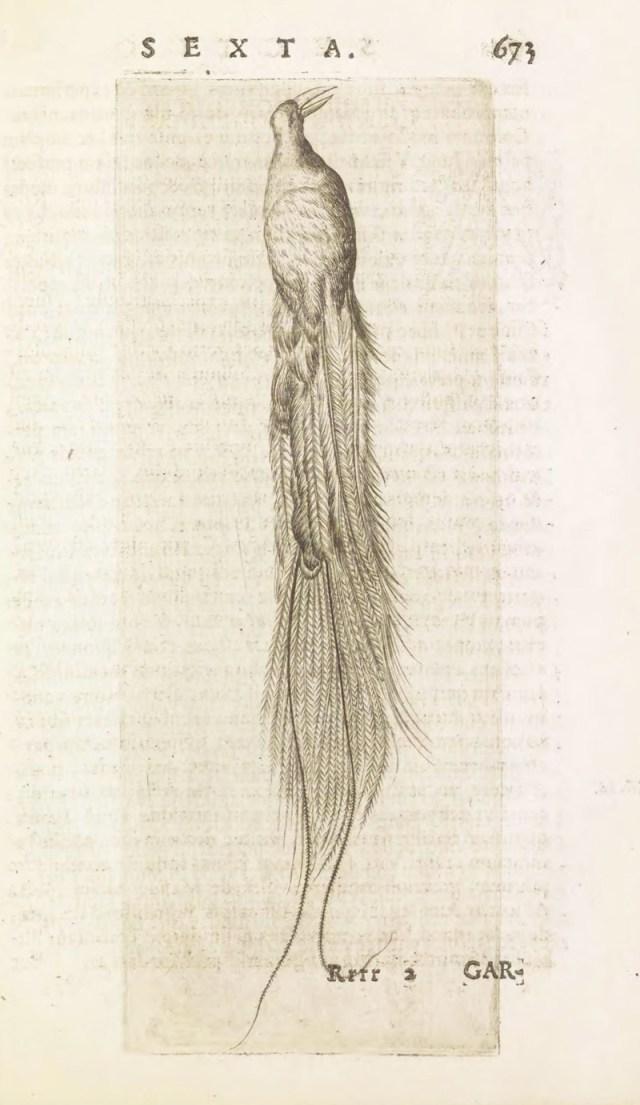 Musaeum Franc. Calceolari