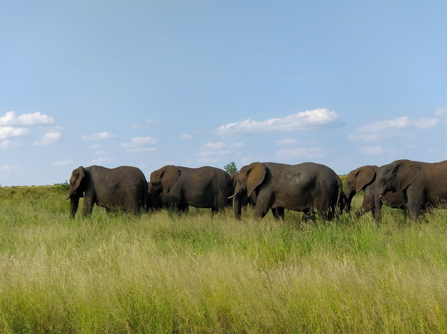 Kruger National Park South Africa Travel Blog Elephants