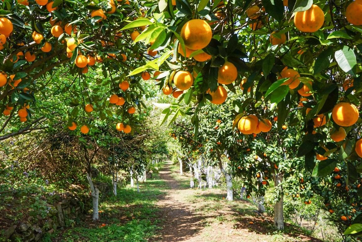 Kreetan Botanical Park