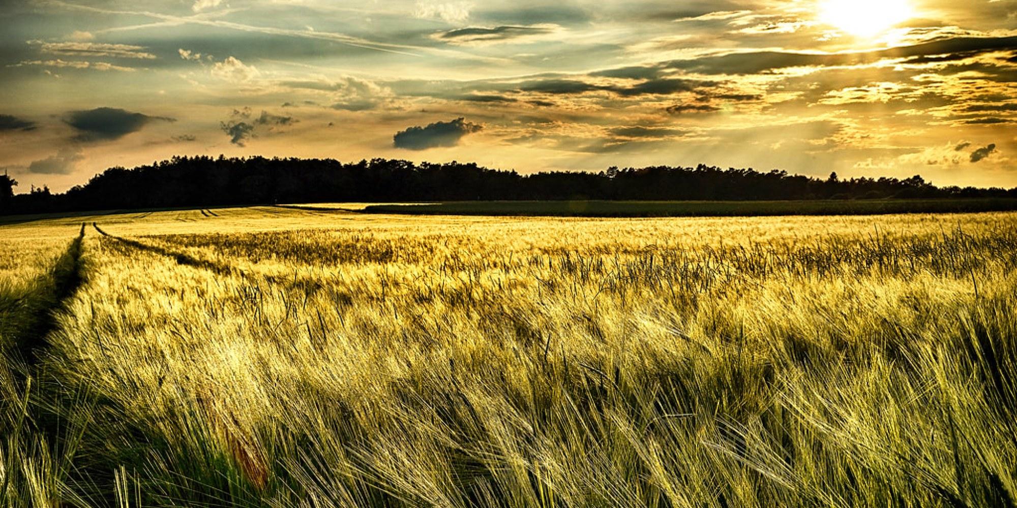 The farmer`s pride (Des Landwirt Stolz)