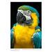 Detail: Blue-and-yellow macaw (Ara ararauna), Guayaquil, Ecuador