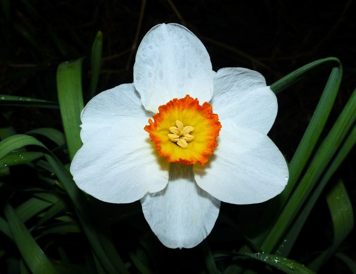 A Spring Flower at Night