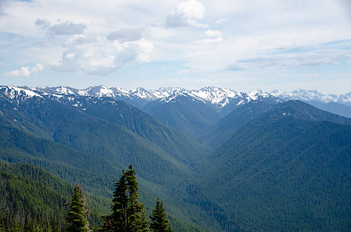 Hurricane Ridge Road in Olympics National Park-015