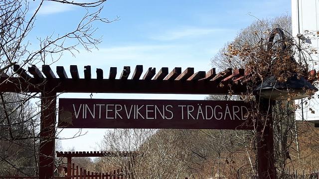 Vintervikens trädgard (1)