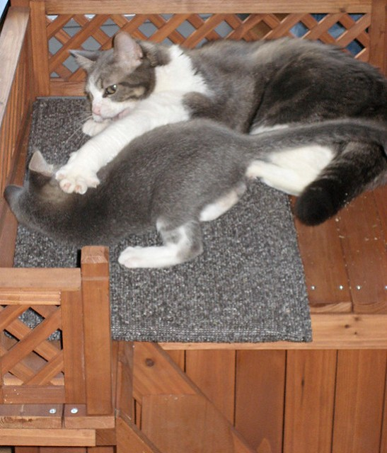 Kitten Transgression Act 2 the Whuppin
