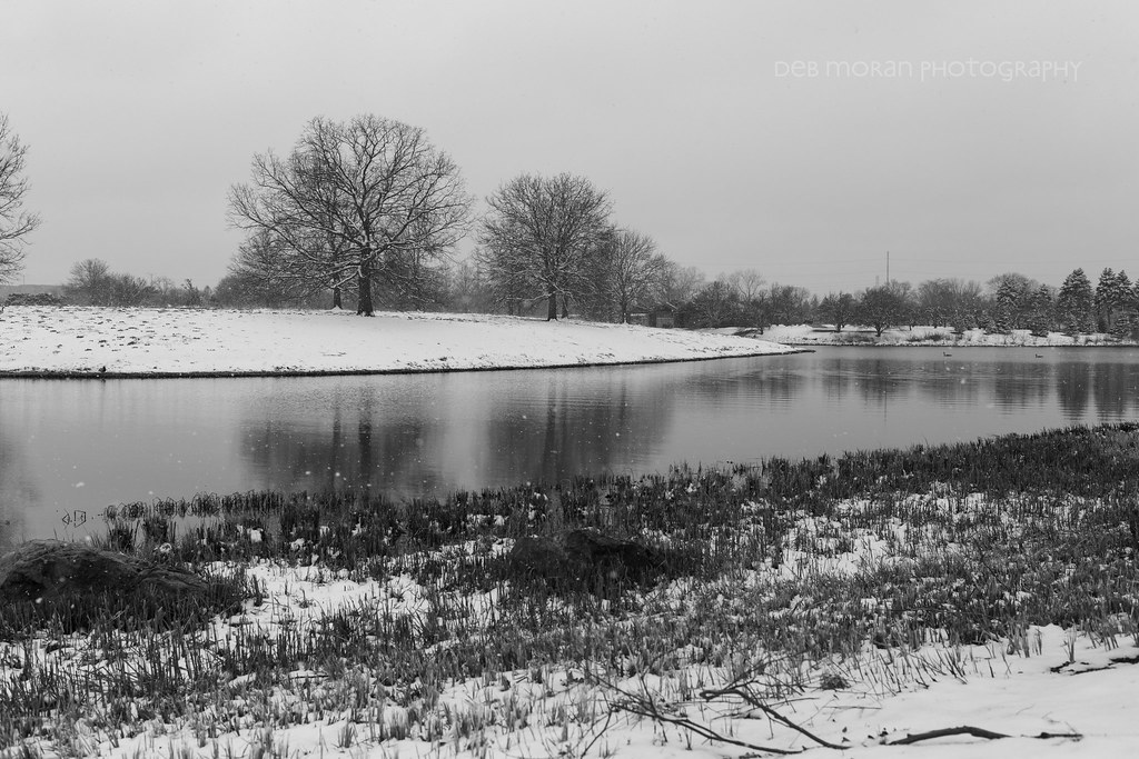 Bird Island in the Snow