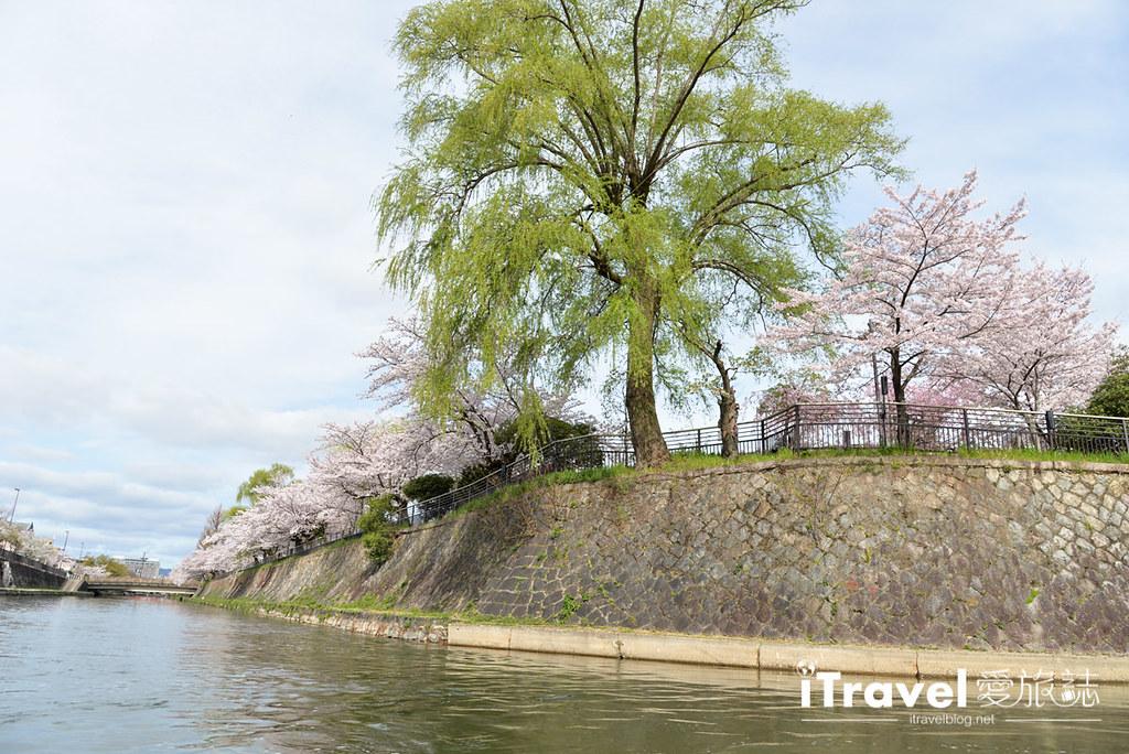 京都赏樱景点 冈崎疏水道 (9)